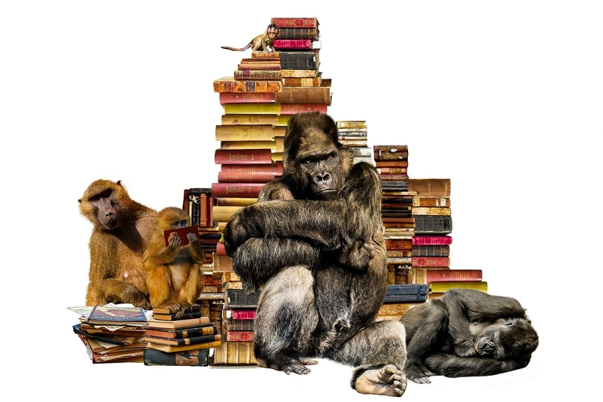 Pile of legal texts surrounded by monkeys and primates